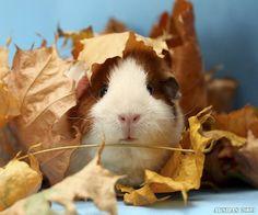Autumnal piggy