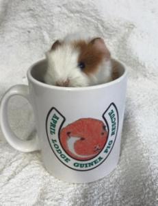Freddy in mug