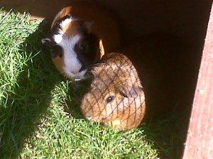 Mylo&Woody