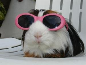 Piggy wearing sunglasses