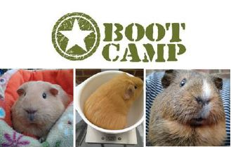 20180326-newsletter-boot-camp