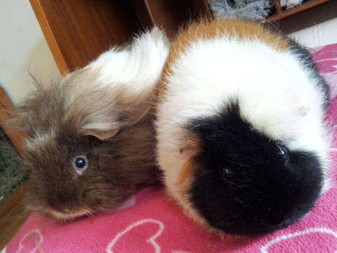 Amber and Hazel